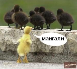 Mangal_2514