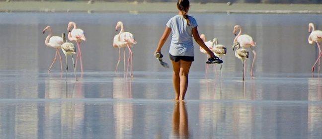 Оставете фламингото на мира!