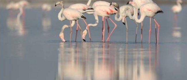 Ново предупреждение да не се смущава фламингото