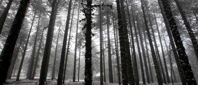 Опазването на горите и зелените площи на острова да стане приоритет на държавата