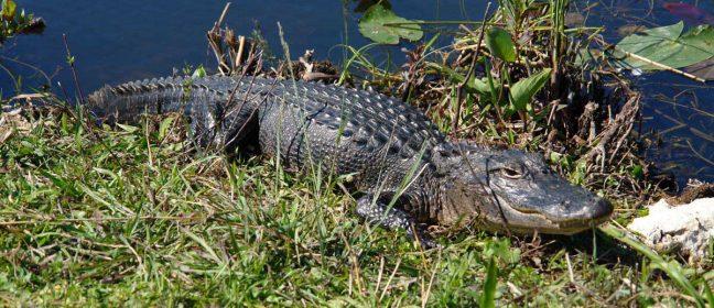 Парк с крокодили в Ахна, Фамагуста