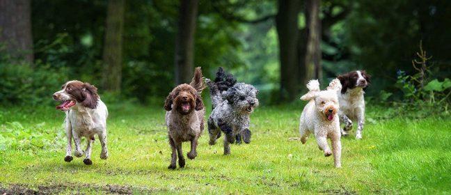 Безплатна схема за микрочипиране на кучета започва 1 август